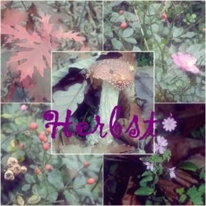Herbst_Potpurri
